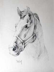 dibujo-de-caballo-5